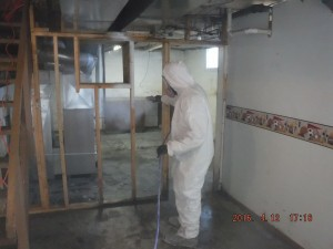 Black mold removal Mansfield Ohio