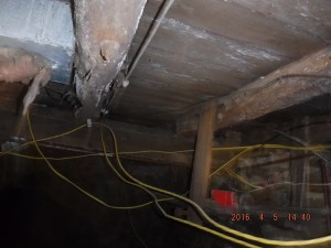 Black mold in basement Cleveland Ohio