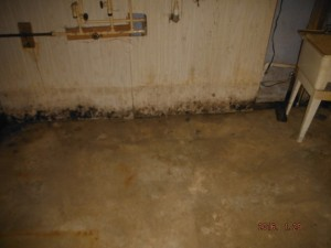 Black mold in basement Mansfield Ohio