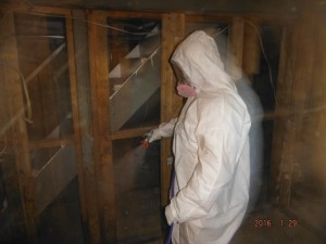 Black mold removal basement   Mansfield Ohio